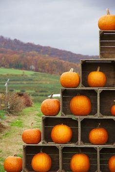 A pumpkin tower! #HelloColor #Fall