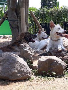 Pole Dog Stay Pdogstay Profile Pinterest
