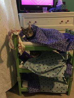 My niece decided that her cats should sleep in bunk beds.