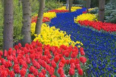 "sixpenceee: "" The world's largest flower garden is called Keukenhof. It is located in the Netherlands. The first 2 pictures are known as the River of Flowers. It looks so beautiful that I just want to..."