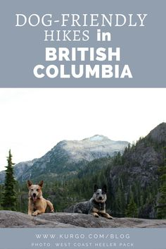 67 Best Dog Friendly Northwest Hikes Images On Pinterest Hiking