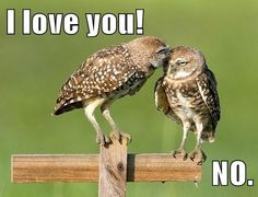 10 Wildlife Smooches for International Kissing Day Funny Owls, Funny Cute, Funny Animals, Cute Animals, Hilarious, Owl Pictures, Funny Animal Pictures, Animal Pics, Steampunk Animals