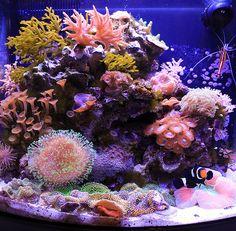 2012 Featured Nano Reefs