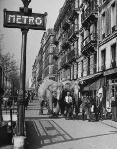 """Paris, Mars 1948 """"éléphants de cirque sur le trottoir""""   Photographie Yale Joel"""
