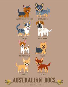 From AUSTRALIA: Australian Terrier, Cattledog, Koolie, Bull Arab, Tenterfield Terrier, Silky Terrier, Dingo, Kelpie.