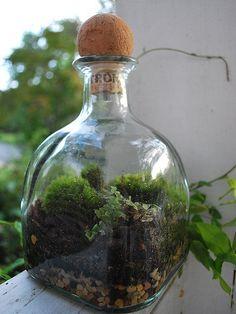 Patrón Bottle Terrarium #Patron #PatronOnPinterest #Patron Art