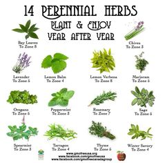 14 perineal herbs to plant every year