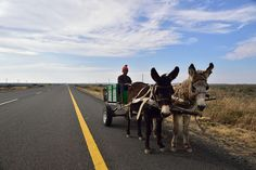 Donkey cart, N1, Northern Cape, South Africa   by South African Tourism Interesting Photos, Cool Photos, Beautiful Pictures, Beautiful Places, People Around The World, Around The Worlds, I Am An African, My Land, Afrikaans