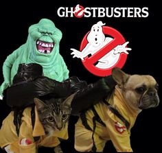 Roxy, the French Bulldog & Dubs the cat in Ghostbusters Costumes.