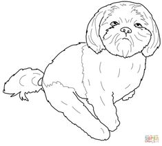 shih tzu coloring page coloring pages for adults pinterest dog