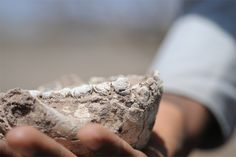 Australopithecus fossil discovery takes to another level the on-going debate on early hominid origin and evolution in Africa. Photo credit: Yohannes Haile-Selassie