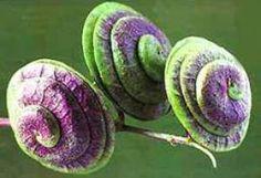 Spiralen in der Natur