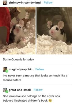 Cute Little Animals, Cute Funny Animals, Funny Cute, Funny Animal Memes, Funny Memes, Animal Pictures, Funny Pictures, Wholesome Memes, Funny Laugh