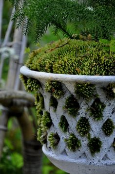 white lattice urn with moss