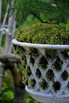 ~white lattice urn with moss.