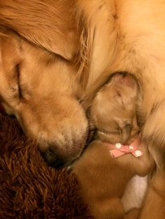 Mama and pup? Mama and pup? Animals And Pets, Nature Animals, Baby Animals, Cute Animals, Cute Puppies, Dogs And Puppies, Cute Dogs, Doggies, Dog Pictures