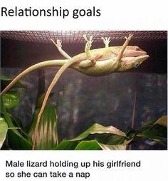 funny lizard sleeping together