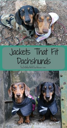 Jackets that Fit Dachshunds