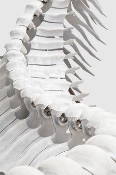 Bone Structure.