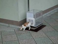 Cat Uses Glass Box As Personal Elevator - Daily Megabyte. I love this, they should patent it.