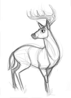Most current Photo deer drawing sketches Tips Is there much actual difference between attracting plus drawing? To help step to this particular conundrum, let me firs Animal Sketches, Art Drawings Sketches, Animal Drawings, Cool Drawings, Drawing Animals, Sketch Art, Unique Drawings, Deer Drawing, Painting & Drawing