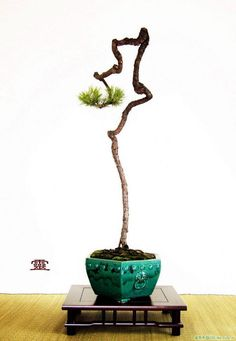 Bonsai Art, Bonsai Plants, Bonsai Garden, Juniper Bonsai, Bonsai Styles, Mini Bonsai, Miniature Trees, Flower Pots, Flowers