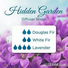 Learn all about lavender essential oil? Included is all there is to know about doTERRA lavender essential oil uses including DIY, food & diffuser recipes Doterra Diffuser, Essential Oil Diffuser Blends, Doterra Essential Oils, Doterra Blends, Yl Oils, Lavender Essential Oil Uses, Lavender Oil, Hidden Garden, Diffuser Recipes