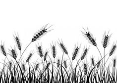 A black and white wheat silhouette vector Vector plant