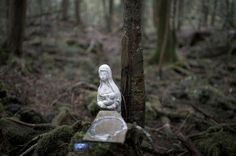 For Pieter ten Hoopen, Following Footsteps Into Japan's 'Suicide Forest' - The New York Times