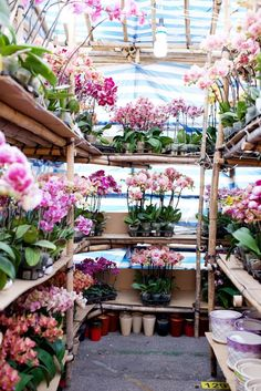 Orchids as far as the eye can see. Did you see the guide to the Flower Markets over on the blog?