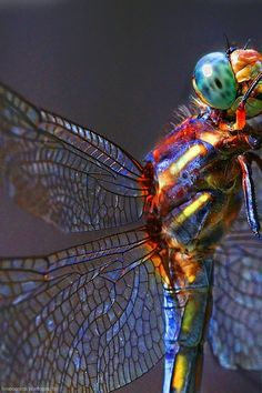 The lovely dragonfly