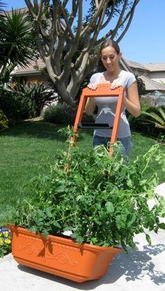 Vegetable Planter | Flower Planter | Outdoor Planters
