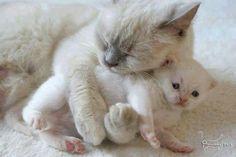 Kitten Love ~