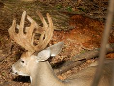 Cool Lighting, Ohio, Deer, Animals, Columbus Ohio, Animales, Animaux, Animal, Animais