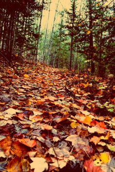 Bonfires and pumpkins, leaves sailing down — October is red and golden and brown.