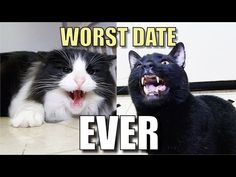 Talking Kitty Cat 38 - Worst Date Ever - http://positivelifemagazine.com/talking-kitty-cat-38-worst-date-ever/