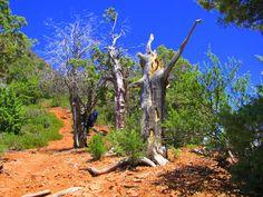Arizona Trail just north of Payson