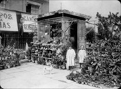 Calle Huertas .El jardín del angel (floristería)