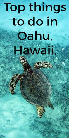 Top things to do in Oahu, Hawaii. In this blog post you will read about where the best places are to stay, eat and what the best activities are to do in Oahu, Hawaii.  http://borntobealive.blog/welcome/destinations/hawaii/