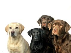 Find Four Labrador Retrievers stock images in HD and millions of other royalty-free stock photos, illustrations and vectors in the Shutterstock collection. Thousands of new, high-quality pictures added every day. I Love Dogs, Cute Dogs, Best Dogs, Dog Lovers, Labrador Retriever, Photo Editing, Royalty Free Stock Photos, Illustration, Pictures