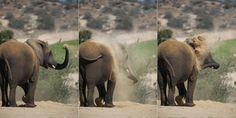 Elephant #skincare by Lisa Diaz