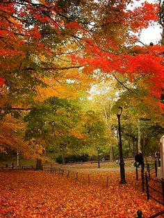 Central Park in Autumn, NYC autumn or fall #holiday #secondhoneymoon