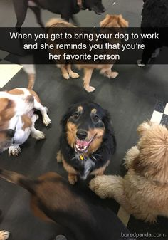 A husky is such a funny dog and also husky puppies are so cute. These funny videos and cute videos of huskies will cheer you up. Check out this funny dogs . Funny Animal Memes, Dog Memes, Cute Funny Animals, Funny Animal Pictures, Cute Baby Animals, Funny Cute, Funny Dogs, Animals And Pets, Funny Memes