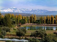 Risultati immagini per mendoza argentina Mendoza, Travel Around The World, Around The Worlds, Argentina Travel, Countries To Visit, Places Of Interest, Wine Country, Trip Planning, Places To See