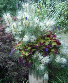 Moira McQuarrie's winning entry in Fine Gardening's fantastic foliage contest. Fabulous!