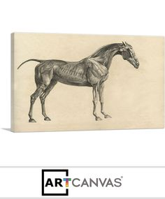 Ready-to-hang The Anatomy Of The Horse Canvas Art Print for Sale canvas art print for sale. Canvas Art Prints, Canvas, Moose Art, Prints For Sale, Art, Art Prints For Sale, Canvas Art, Anatomy