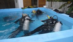 You can try diving for free Diving, Sci Fi, Canning, Pets, Free, Animals, Snorkeling, Animals And Pets, Animales