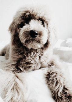 dogs and puppies Puppy Care, Pet Puppy, Dog Cat, Cute Puppies, Cute Dogs, Dogs And Puppies, Doggies, Amor Animal, Mundo Animal