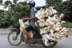 Two trips are for pansies....AFLAC!