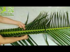 A lesson in palm weaving from Donna at Our Lady of Grace C is part of Leaf crafts - Created on April 2011 using FlipShare Palm Frond Art, Palm Tree Art, Palm Fronds, Coconut Leaves, Decoration For Ganpati, Cement Garden, Rustic Wedding Backdrops, Modern Flower Arrangements, Church Flowers